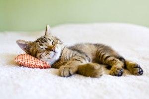 sommeil-sieste